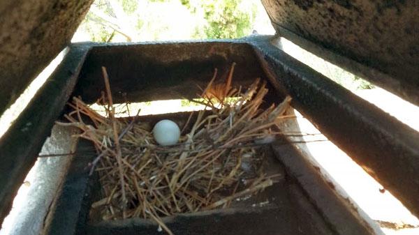 Rimozione nidi da tetti